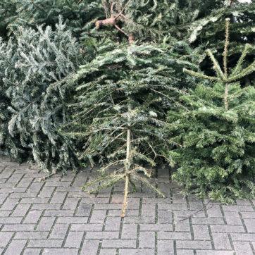 Points de collecte des sapins de Noël